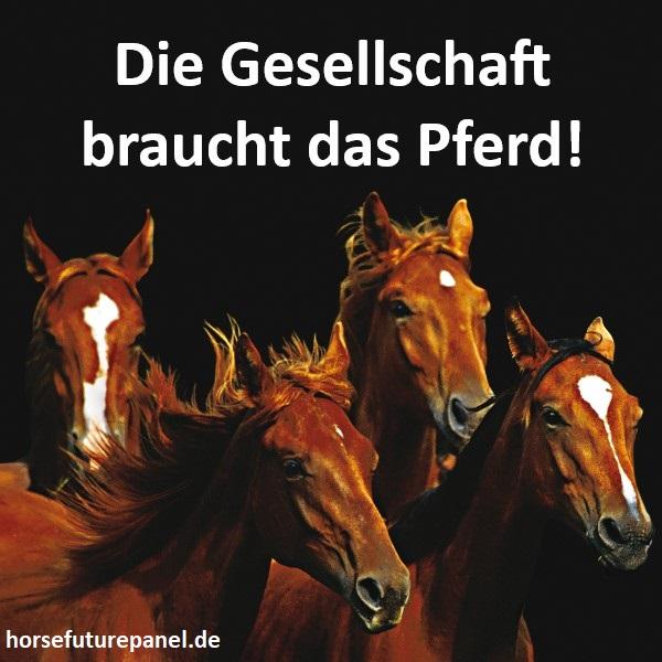 Die Gesellschaft braucht das Pferd - Webseite