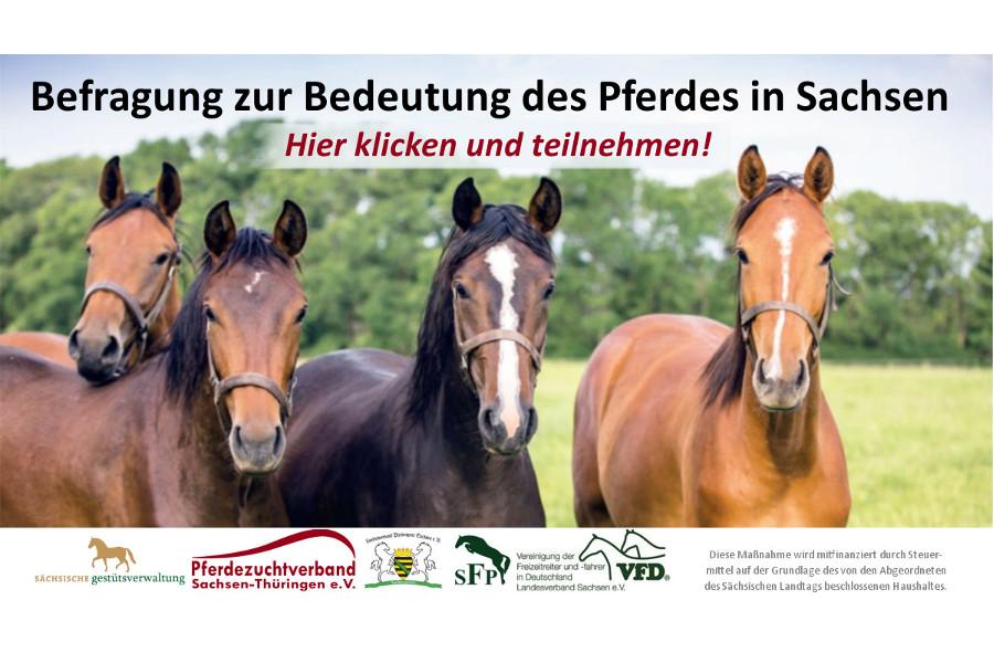 Projekt zur Entwicklung der Pferdewirtschaft im Freistaat Sachsen