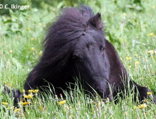 Alte Pferde in Deutschland