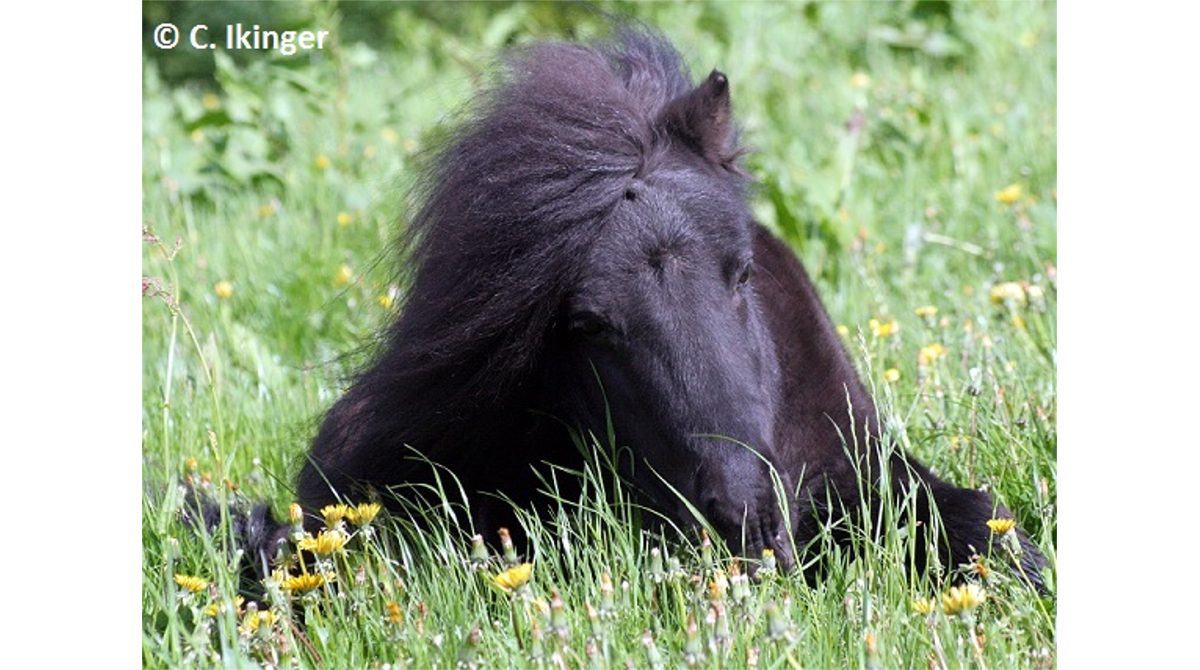 Alte Pferde in Deutschland - HFP, C C.Ikinger